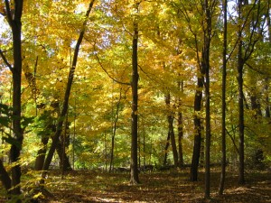 Divine Word Foliage